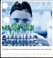 The DNA of the Plant is something Yilo staff takes very seriously