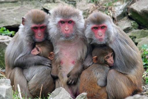 Alpha Genesis Monkeys Receive Royal Treatment Throughout Hurricane Dorian