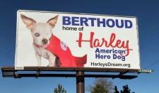 Harley Billboard in Berthoud, CO