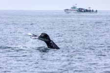 Whale Watching Tours San Diego