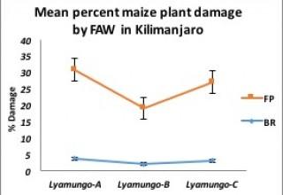 Plant damage in Kilimanjaro