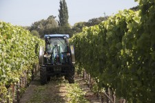Agrothermal Equipment in the Vineyard