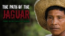 The Path of the Jaguar