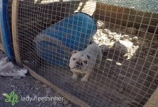 Dog in cage from Lady Freethinker's investigation