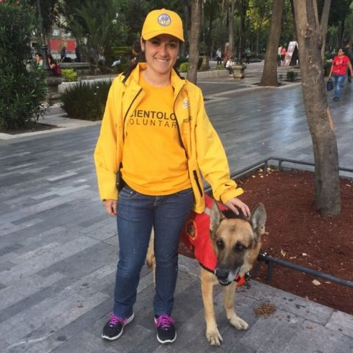 Canine Heroes Who Saved Lives in Mexico
