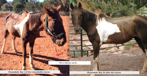 Stop Animal ViolencE Launches Campaign to SAVE Havasu Horses