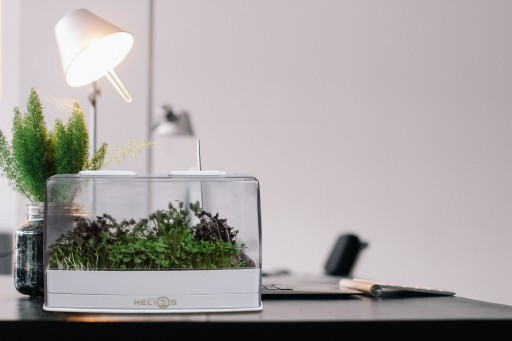 Helios Seeks Funding for a Step in Sustainable Food With Microgreens