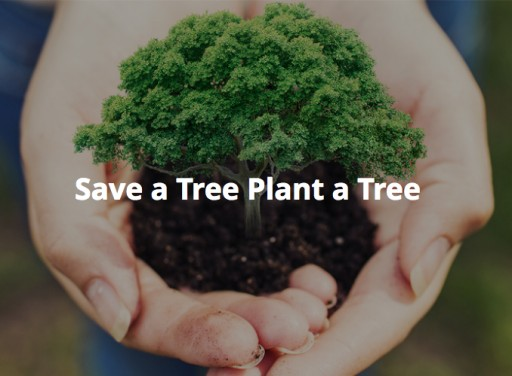 ZorroSign is Planting Trees Around the World