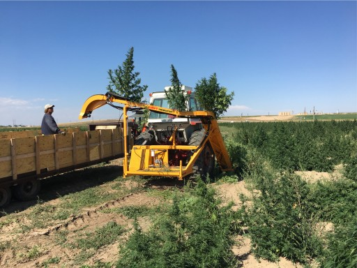 Triminator Releases a Whole-Plant CBD Hemp Harvesting Solution