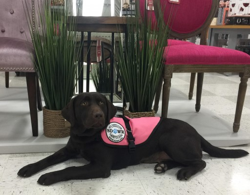 Service Dogs by Warren Retrievers Delivers Diabetic Alert Dog to Child in Kernersville NC