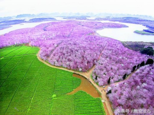 "Tourism Supply-Side Reform Boosts Gui'an's ""Beauty Economy"""