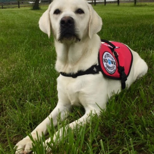 Service Dogs by Warren Retrievers Delivers Diabetic Alert Service Dog to Child in Rockwell City, Iowa