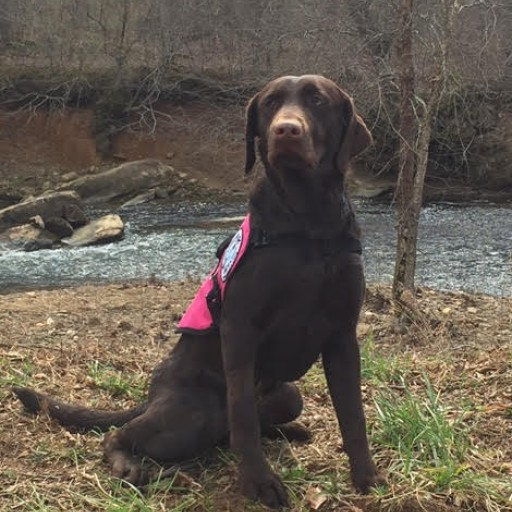 Service Dogs by Warren Retrievers Delivers Diabetic Alert Dog to Transylvania LA