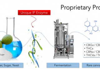Biosynthesis of Cannabinoids