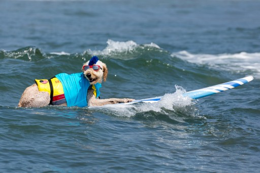 Top Dogs at Unleashed by Petco Imperial Beach Surf Dog Competition