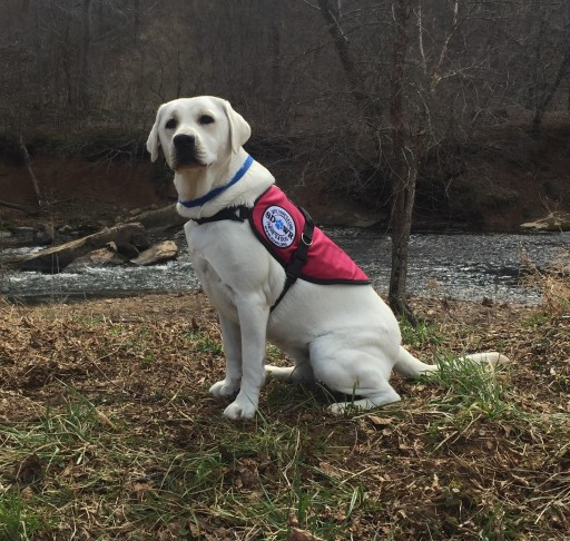 Service Dogs by Warren Retrievers Delivers Diabetic Alert  Service Dog to Child in Apalachin, NY