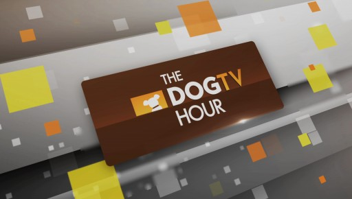 The DOGTV Hour - Now on Animal Planet