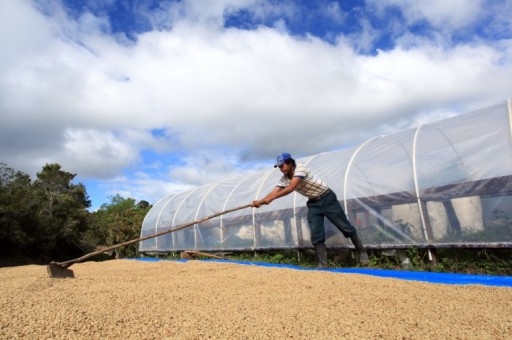 Honduras' Rich Coffee Culture is Ready to Delight International Travelers