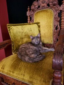Miss Kitty, Resident Feline at Lilly Schoolhouse