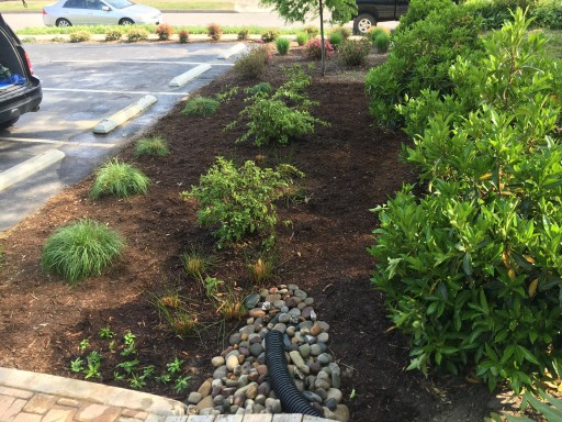 Welligent Builds Rain Garden in Collaboration With Elizabeth River Project, Bay Environmental, and City of Norfolk