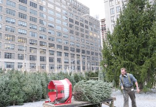 SoHo Trees New Location