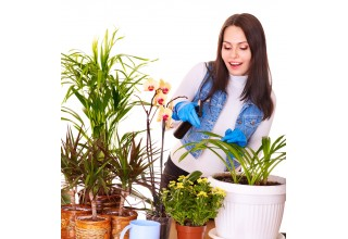 Control Fungus Gnats in Houseplants