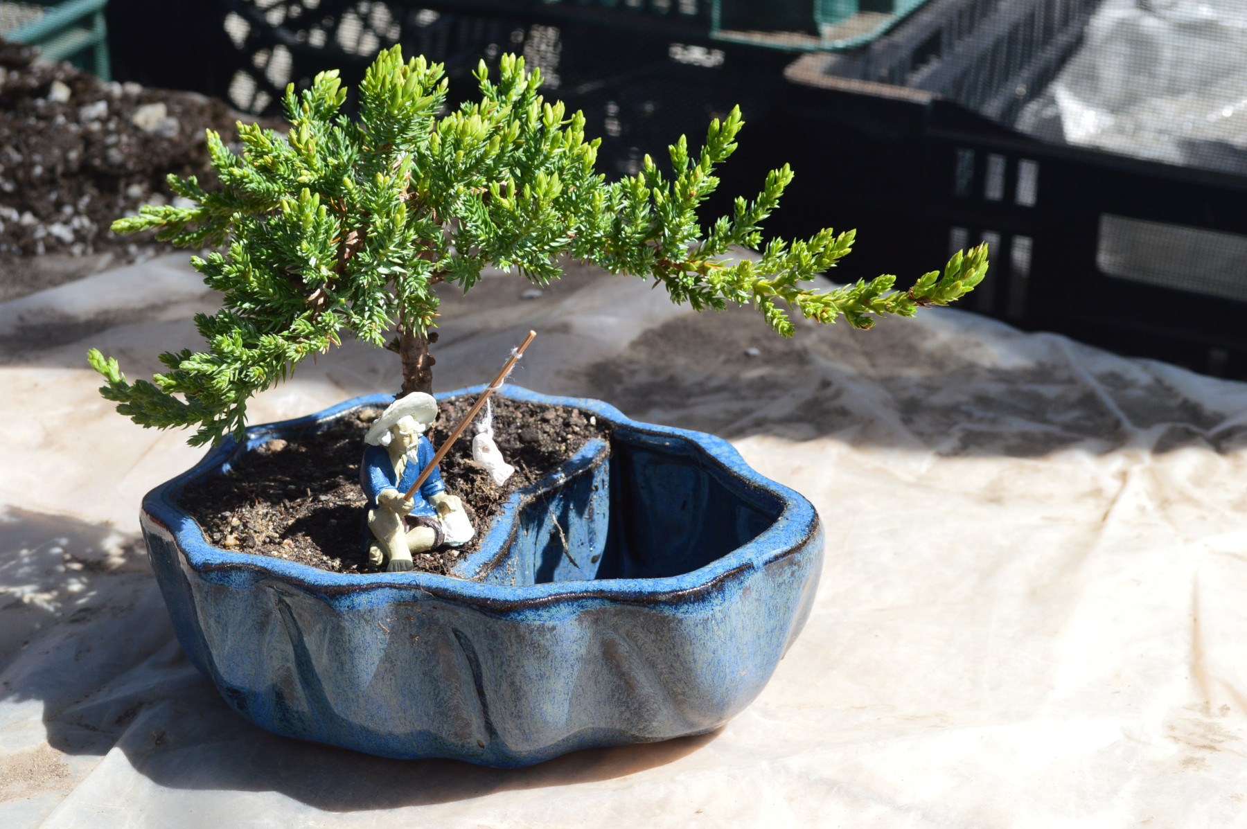Learn The Art Of Bonsai From 9greenbox Com Producing Lavish Household Plants And Accessories Since 2007 Newswire