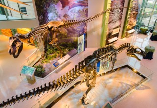 Naylor Family Dinosaur Gallery
