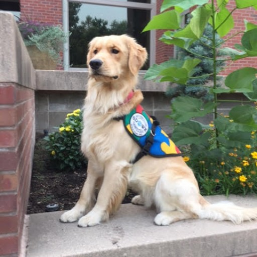 Trained Autism Response Service Dog to Help Young Woman in Walla Wallla, WA