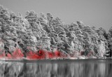 A shallow lake scene reveals excess methane emission (red) when imaged with Telops' Hyper-Cam. Reprinted by permission from Macmillan Publishers Ltd: Nature Climate Change, copyright 2015. Credit: Magnus Gålfalk/Linköping University.