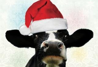 Alpenrose Cow