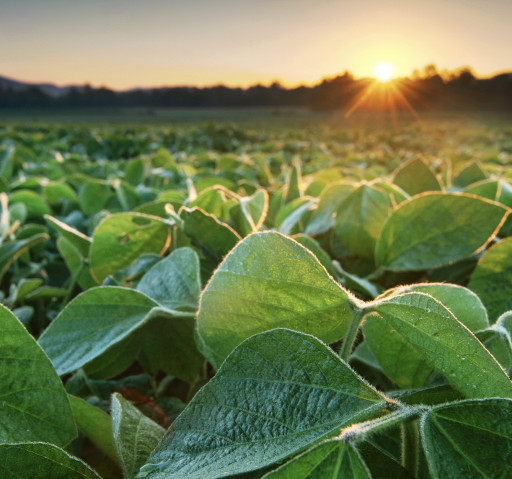Organic Corn & Soybeans Are Now Able to Be Hedged for the First Time