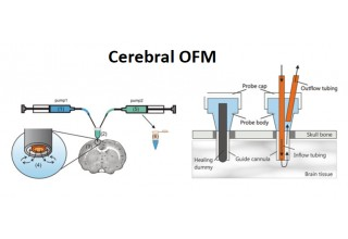 Cerebral Sampling with OFM