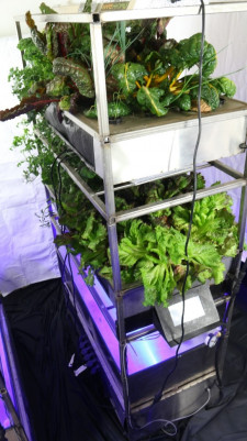 Eden Grow Systems