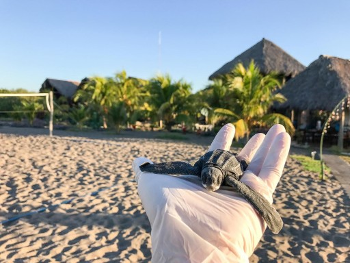Nicaraguan Hostel Promotes New Wave of Sustainable Tourism