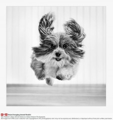 Pawsonality Pet Photography by Abby Malone