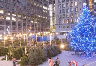 Christmas Tree at Sundown