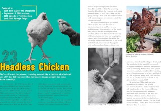 Headless 'Mike' Chicken