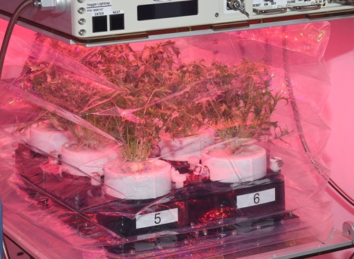 Plant Growth Chamber Developed for NASA by Tupperware and Techshot Launching on SpaceX CRS-14