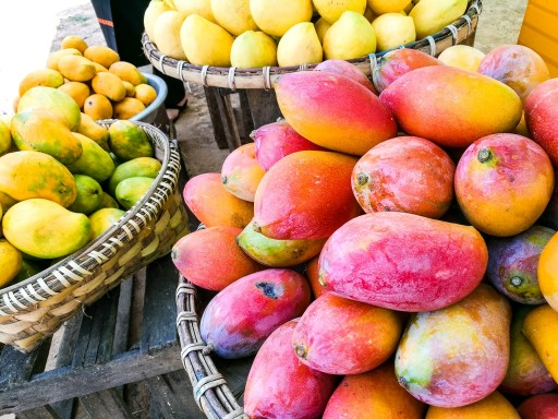 Mango Season Started in Myanmar