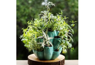 Cacti, Succulent and Herb Pot