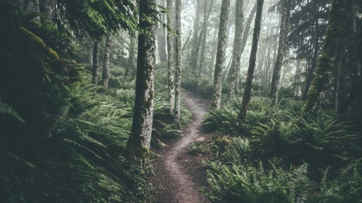 Forest Trail for MTB