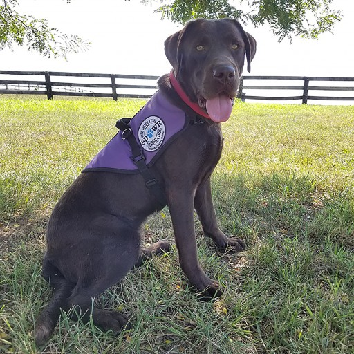 Diabetic Alert Dog Yukon Will Help Young Girl With Challenges of Living With Type 1 Diabetes.