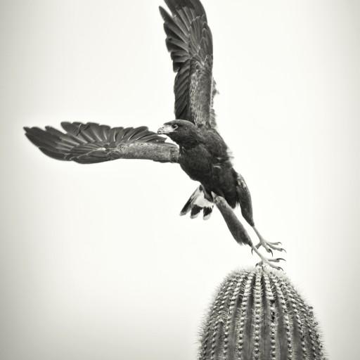 Desert Museum Names Photo Contest Winners
