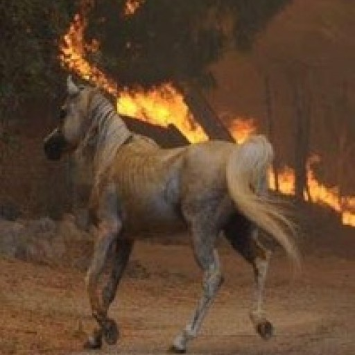 Fashion Compassion Helps California Fire Victims (People and Horses)