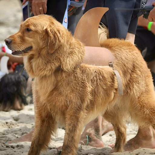 """Barknado"" World Record at  Imperial Beach Surf Dog Competition"