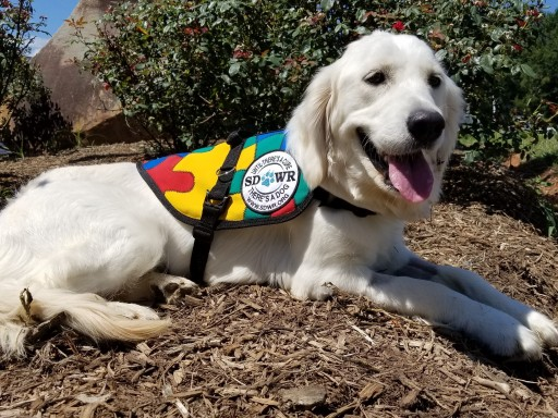 Service Dogs by Warren Retrievers Delivers Autism Service Dog to Girl in Katy, TX