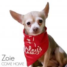 Zoie - Missing from Winter Garden, FL
