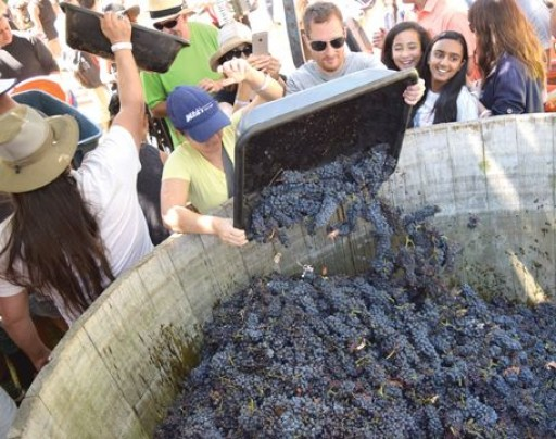 Stomp the Grapes. Drink the Wine.