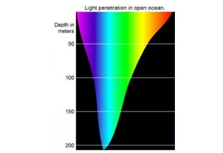 Why 475nm Blue Light is the Peak Circadian Signal